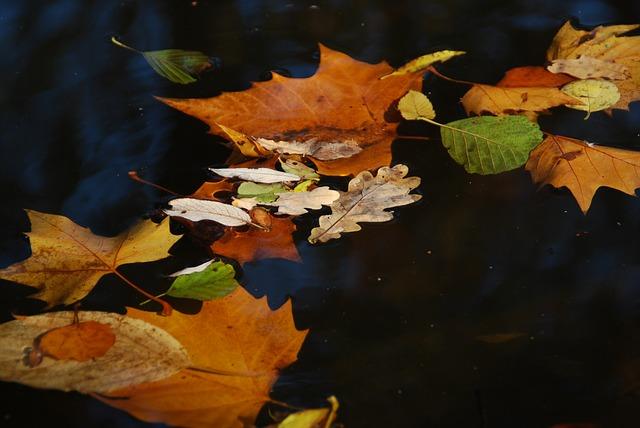 listí ve vodě