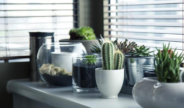 Kaktusy v bytě